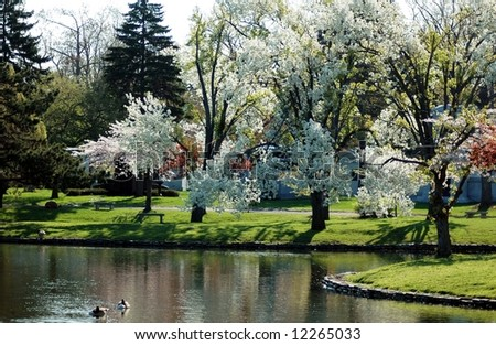 Flowering Trees-Flowering trees on Mirror Lake Forest Lawn-Buffalo,New York - stock photo