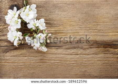 Flowering twig of apple tree on wooden background. Copy space - stock photo