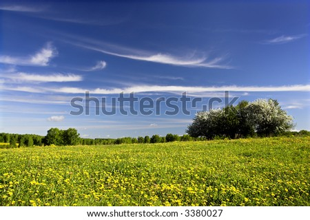 Flowering yellow dandelions and apple trees - stock photo