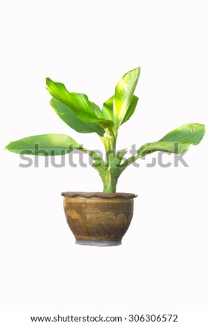 flowerpot on white background