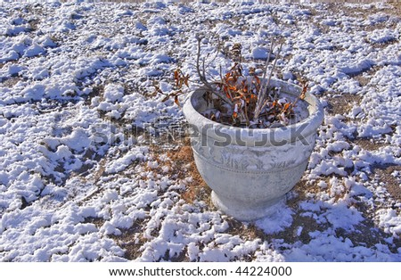 Flowerpot Sitting Amongst a Winter's Snowfall on the Ground - stock photo