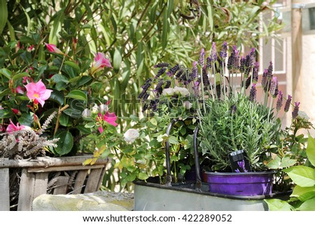 Flowerpots near the old wall of typical Provence village, beautiful street decorated with flowers, summer outdoors - stock photo