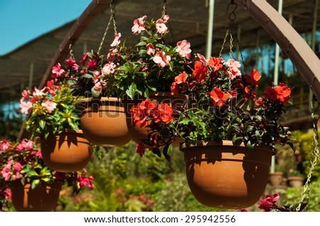 Flowerpots with Impatiens flowers in the garden - stock photo