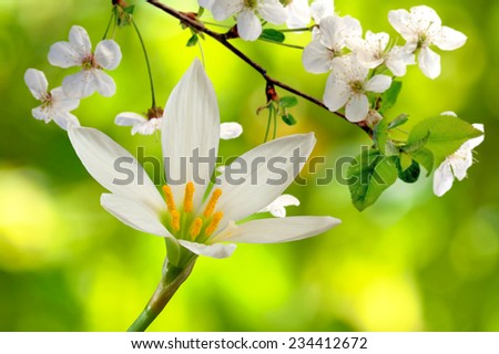 flowers and blooming branches on a yellow background - stock photo