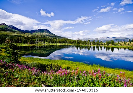 Flowers and blue skies at Little Molas Lake in the San Juan Mountains of Colorado. - stock photo