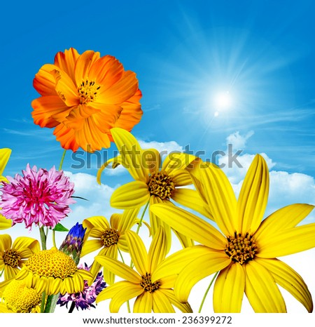 flowers and blue sky - stock photo