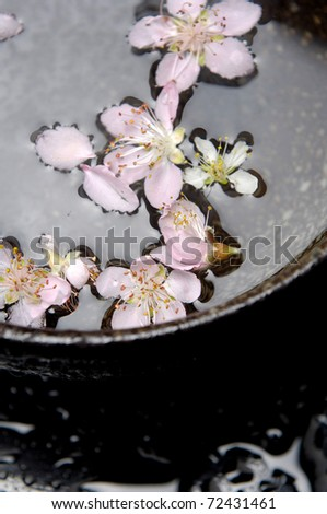 Flowers and buds cherry in bowl water - stock photo