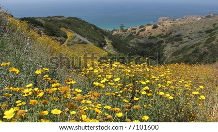 Flowers and ocean view from the Flying Mane Trail, Portuguese Bend Nature Reserve, California