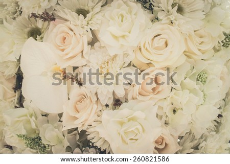 flowers and petals background - stock photo