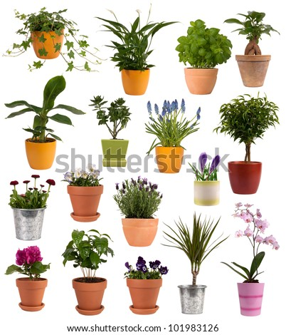 Flowers and plants in pots isolated on white background - stock photo