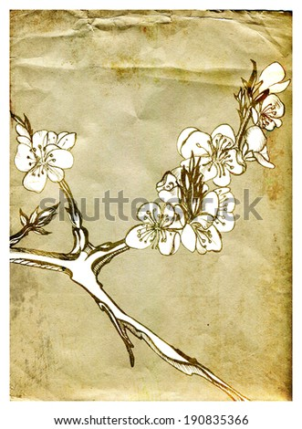 Flowers apricots on the old paper background, graphics - stock photo