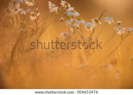 flowers as a colorful background, macro photo, nature series - stock photo