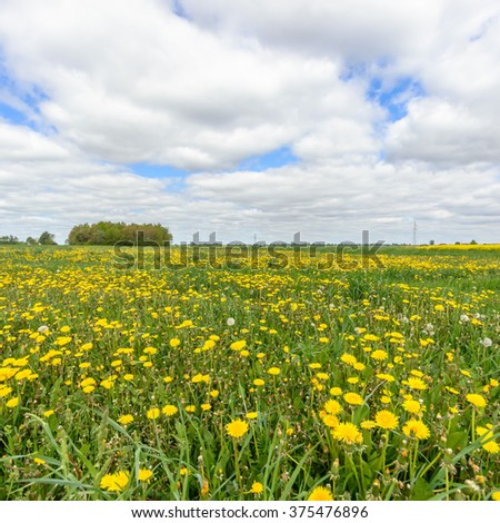 flowers as a colorful background, nature series - stock photo
