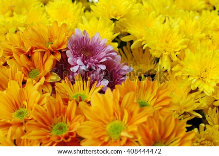 Flowers at a Market in Thailand - stock photo