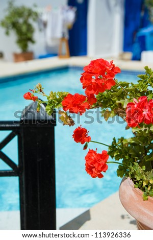 Flowers at Santorini island,Greece - stock photo