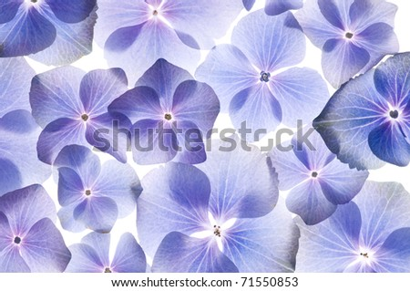 Flowers background - stock photo