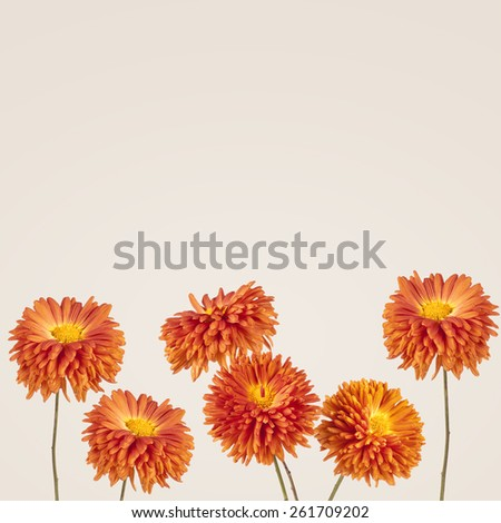 Flowers background. Aster - stock photo