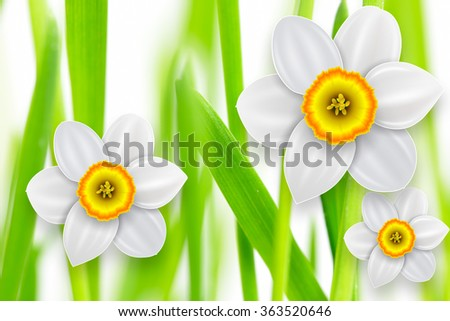 Flowers background, white spring flowers and green grass. - stock photo