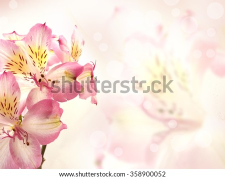 Flowers background with pink flowers in blurred style