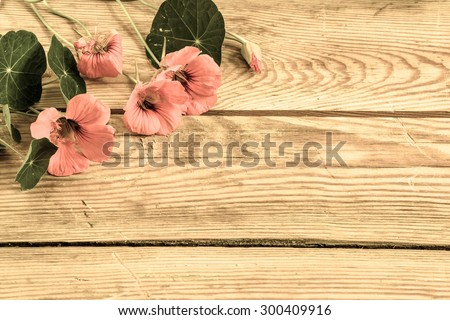 Flowers backgrounds vintage style with flowers of nasturtium arranged on bright wood useful as greeting card, mothers day card or invitations card - stock photo