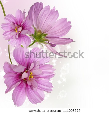 Flowers beautiful border - stock photo