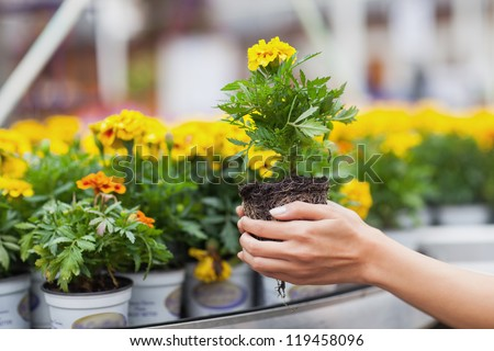 Flowers being put in pots in garden center - stock photo