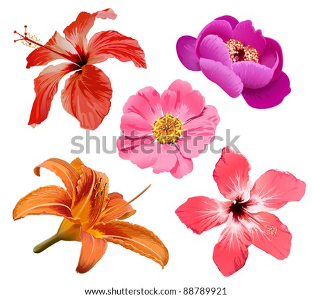 Flowers bloom - stock photo