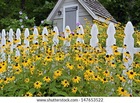Flowers blooming in front of picket fence and garden shed. - stock photo