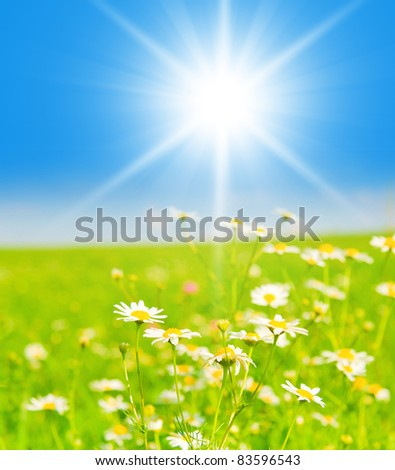 Flowers Blooming Landscape Wallpaper - stock photo