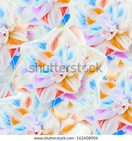 flowers, bouquet of gerber  - stock photo