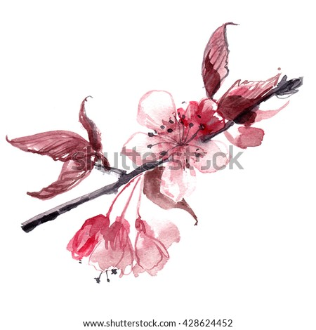 Flowers cherries painted in watercolor on white background. Summer flowers. Watercolor Sketch. Wedding decorations. Apple, cherry, pink flowers on a branch