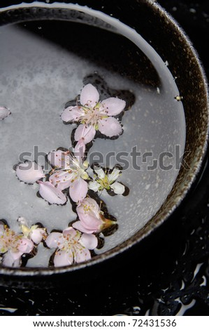 Flowers cherry in bowl water - stock photo