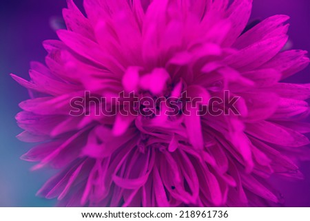 flowers close up - stock photo