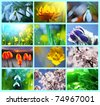 flowers collage - stock photo
