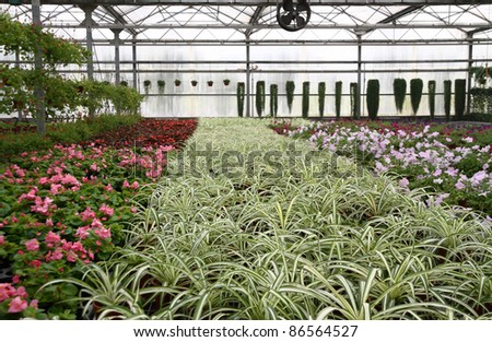 flowers cultivation in greenhouses in china