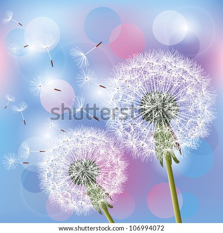 Flowers dandelions on light blue - pink background. Place for text