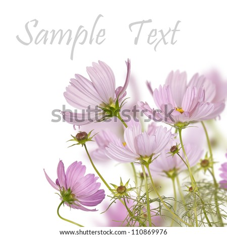Flowers decorative border - stock photo