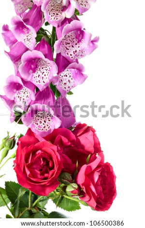 Flowers. Digitalis and climbing rose on a white background - stock photo