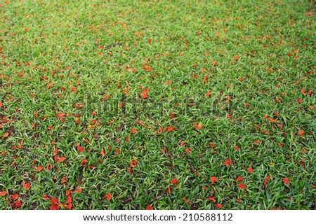 Flowers fall from a tree on green grass
