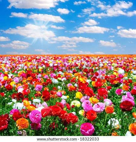 flowers field - stock photo