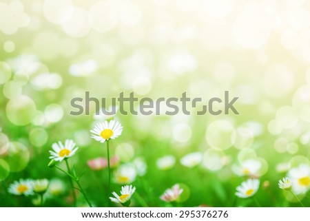 flowers field, flowers background. bright and soft focus process