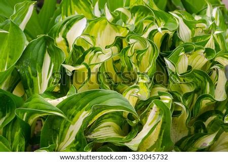 flowers, flowering, foliage, background , bright - stock photo