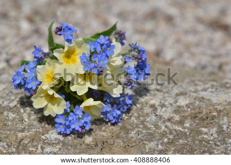 Flowers. Flowers on stone background. Flowers, flowers, flowers, flowers on old stone, copy space. Flowers, spring flowers isolated on nature background. Flowers card for holiday.  - stock photo