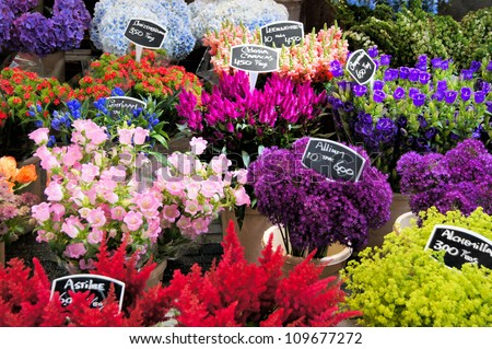 Flowers for sale at a Dutch flower market, Amsterdam, The Netherlands - stock photo