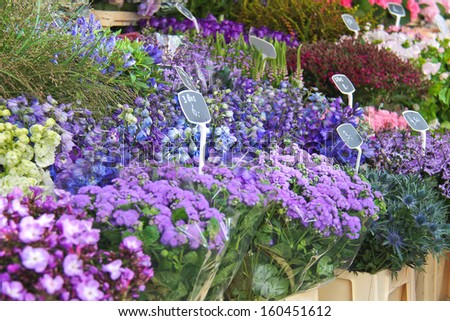 Flowers for sale at a Dutch flower market,  Netherlands  - stock photo