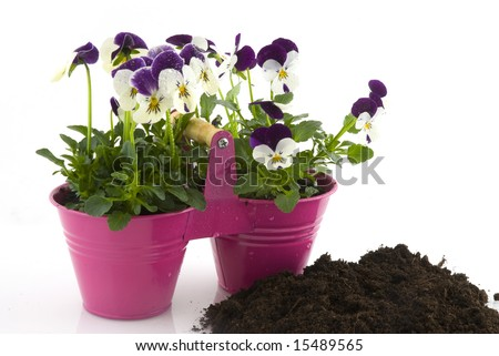 flowers for the garden as purple violins