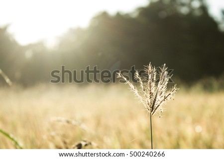 Flowers, grass, beautiful light.