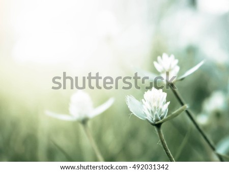 flowers grass blur style for background vintage