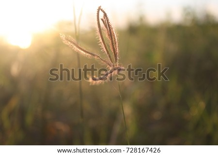 Flowers grass evening sky