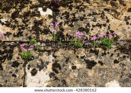 Flowers growing in a stone wall